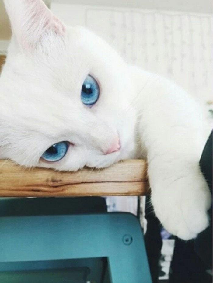 小奇猫简笔画步骤
