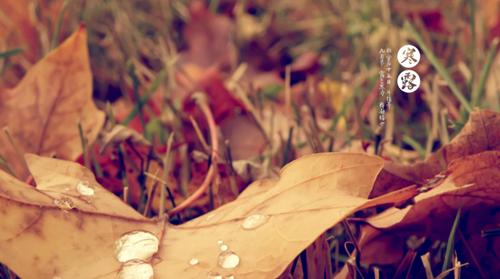 秋季如何防干燥 多吃养生圣品