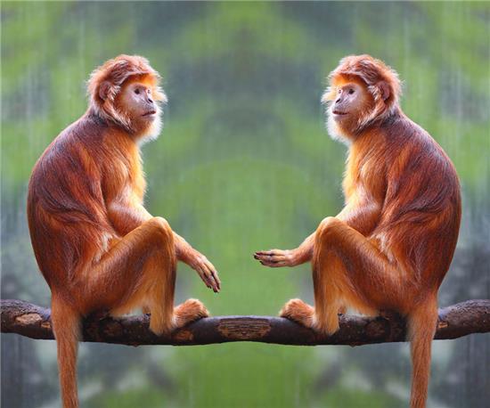 做梦梦见被猴子攻击