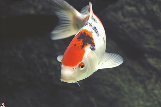 梦到自己在河里抓鱼是什么寓意