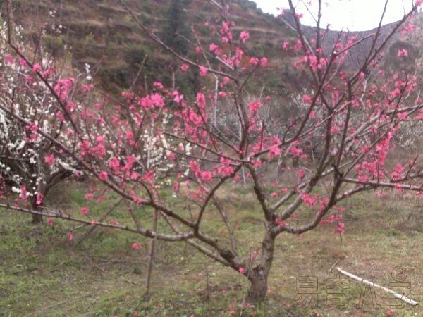 五月你的桃花旺吗