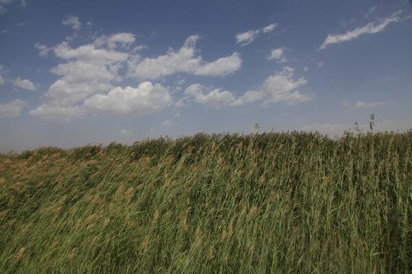 风水环境对人生、命运的影响有哪些?